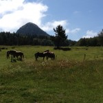 gerbier et chevaux